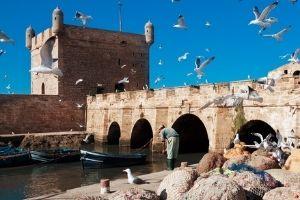 Marina in Essaouira