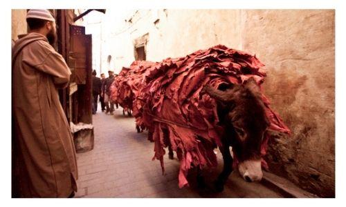 Fez Day Tour